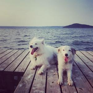 Zima and Pippa sitting on a jetty at Lake Rotorua