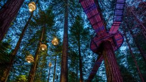 Redwoods nightlights from the ground