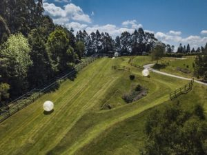 Rolling down the hill in a Zorb on a Rotorua Day Trip