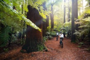 The Redwoods are great for all activities
